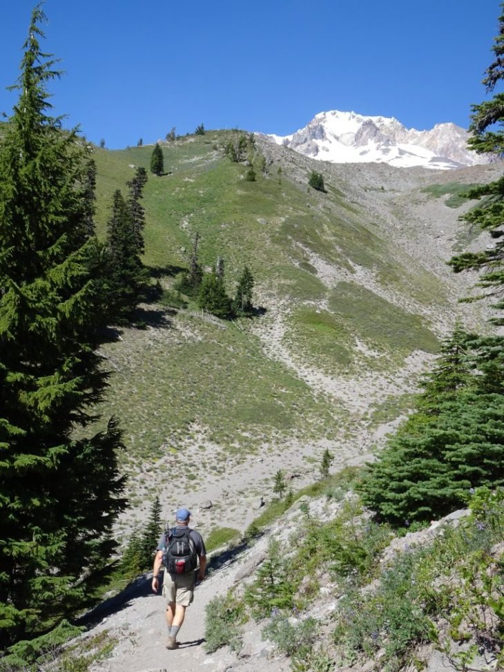 Beautiful scenery of Timberline Trail