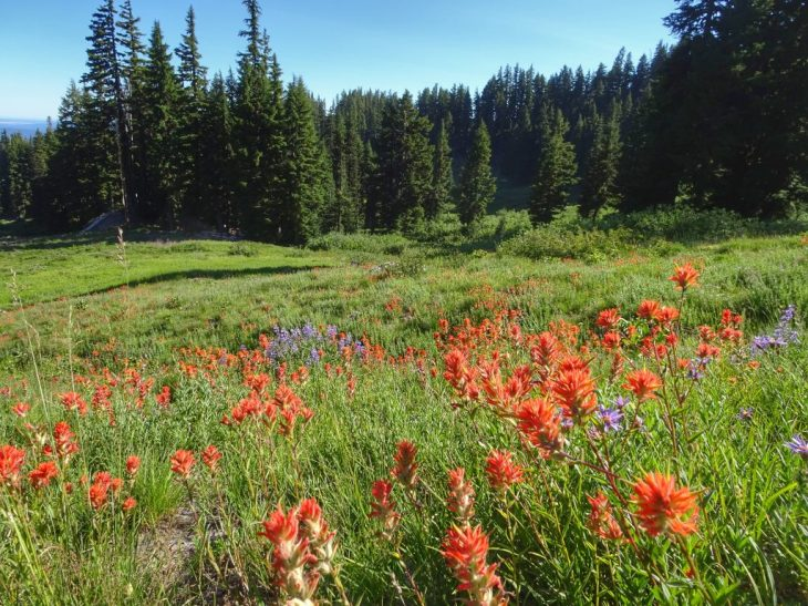 Pretty meadows around the ski area