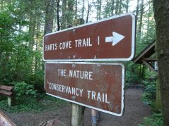 The Nature Conservancy Trail at Cascade Head