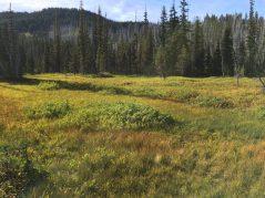 Meadows along Canyon Creek Meadows Trail