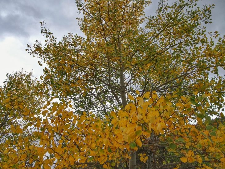Some of aspen trees were changing color already.