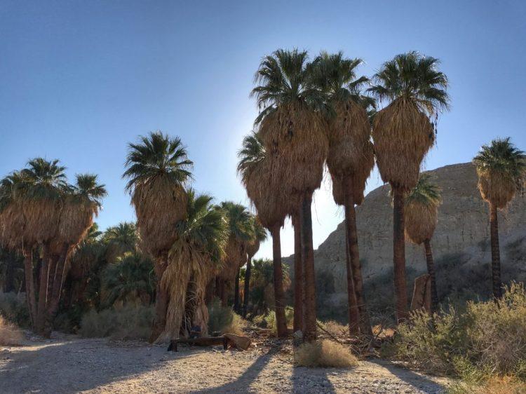 Beautiful scenery of Pushawalla Palms Oasis