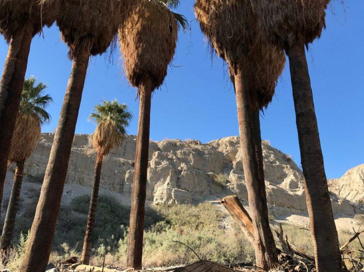 Pushawalla Palms Oasis