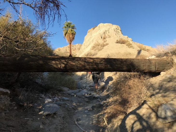 A couple we met at the oasis told us about the route to get back. This down tree was one of the landmarks. So we know we headed the right way.