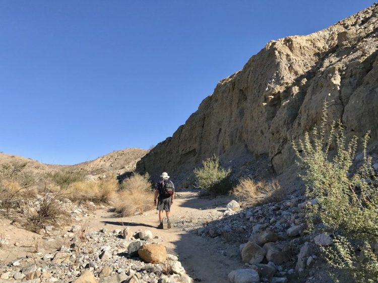 A typical view of the trail next to the uplifted section.