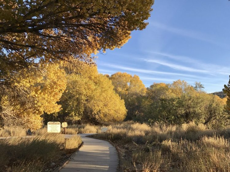 Part of the trails is a boardwalk. It's the first week of December and the fall season is still going strong here.