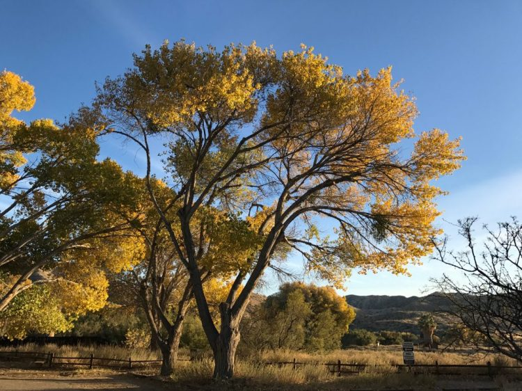 The warm color of trees at the parking lot of the Preserve. I knew we were in for a beautiful walk.