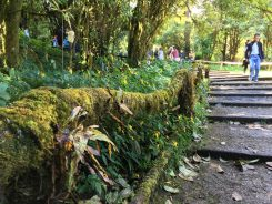 Mossy forest at Doi Inthanon