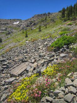Wildflowers in early July