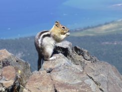 These guys were all over around the summit. People must be feeding them.