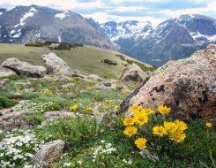 A typical scene of alpine tundra