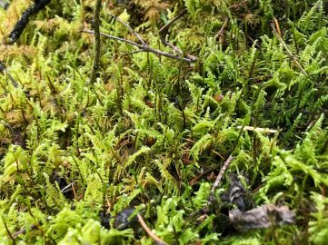 Another moss close-up