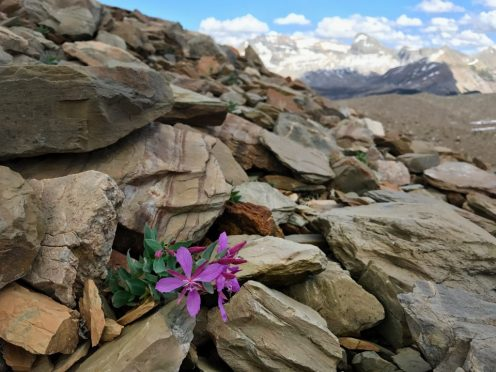 This plant was thriving on this rock pile. That's hard living.